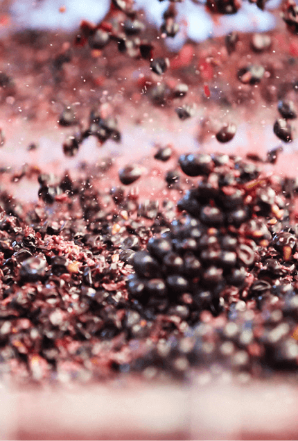 innocent_bystander_winemaking_04